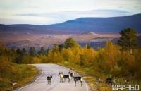 赴芬兰留学要怎么申请呢?