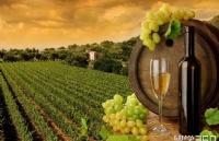 新西兰留学 | 东部理工学院双学士学位-葡萄酒酿制与栽培