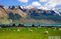 留学新西兰 如何花钱才能实现最高性价比?