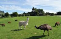 新西兰留学:奥克兰大学理学研究生文凭-生理学专业介绍
