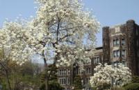 延世大学校园环境