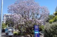 2018年留学新西兰:奥克兰理工大学语言课程介绍