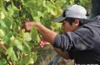 新西兰学习葡萄酒专业绝对有前(钱)途!