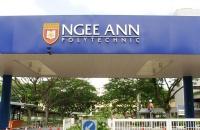 新加坡义安理工学院开设专业