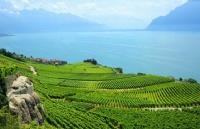 瑞士留学的商业、金融、经济专业介绍