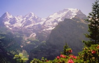 IMI瑞士国际酒店管理大学课程特色