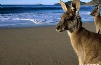 澳大利亚留学花费比较低的城市大盘点!