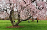 2019年如何申请西弗吉尼亚州立大学?