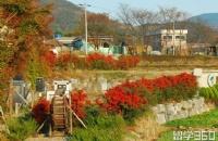 韩国留学移民申请条件简述