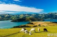 新西兰留学:读预科阶段申请条件有哪些呢?