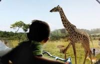 不只是留学――丹麦这个动物园了不起