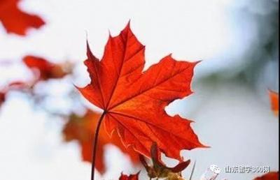 2019年加拿大留学本、硕申请最新变化!