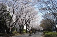 早准备,早申请,抓住先机顺利获得日本千叶大学录取