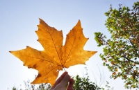 留学加拿大都有哪些奖学金机会?