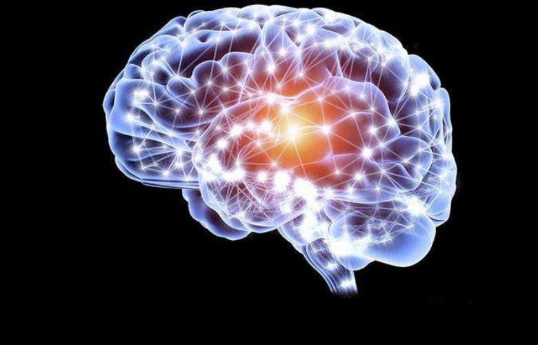 助理研究员项目|哈佛大学脑科学中心实验室