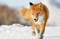 耶鲁校长开学演讲:你想做狐狸还是刺猬?