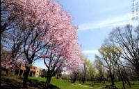 日本北海道大学有哪些专业