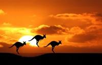 �住!想要不被澳洲八大遣返,你得注意�@些!