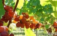 一站式答疑解惑 | 新西兰葡萄酒专业课程全解析