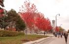 干货:加拿大硕士留学申请的两种方案