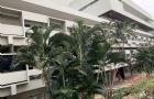 曼谷大学传媒