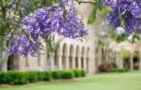 昆士兰大学:用大数据感知世界洞悉未来
