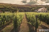 深受雇主青睐的职业之一 | 葡萄栽培和酿造专业