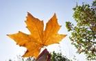 U.S. News生活排名,加拿大蝉联4年榜首!