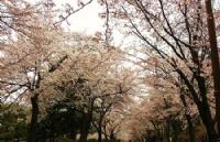 韩国留学影视专业解析