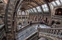 """来英国学习""""博物馆学""""专业,保护管理人类瑰宝"""