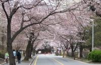 韩国留学,其实除了高考,还有留学这么一条阳光大道