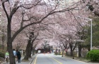 韩国留学,跨专业好申请么?这些你要知道