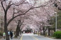 最新资讯!最全的韩国留学优势分析