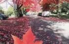 加拿大留学   雅思成绩有多重要!