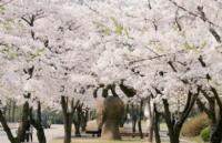 韩国留学热点问题早知道