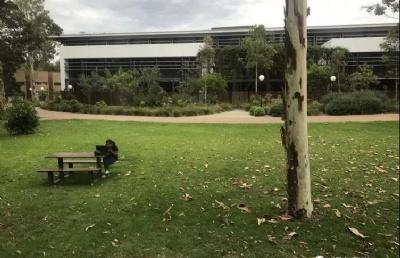 大部分中国亚博体育亚洲官网生都不知道!这些澳大利亚大学竟然自动加分?