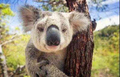 想2020年入�x澳大利��名校?史上最全澳洲留�W流程����查收
