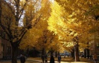 日本名校留学费用一览