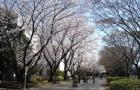 名校推荐| 日本千叶大学的世界排名