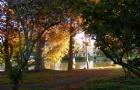 新西兰留学:申请新西兰大学要雅思吗
