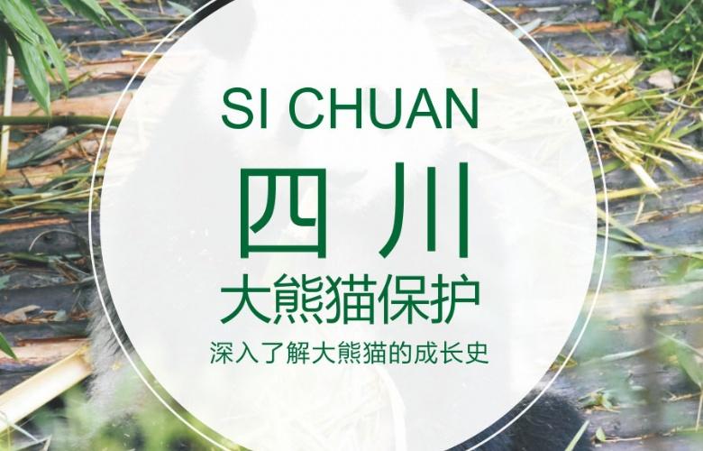 四川大熊猫保护项目