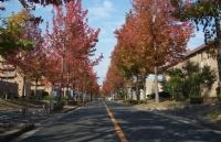 日本以教育学著称的名校――广岛大学