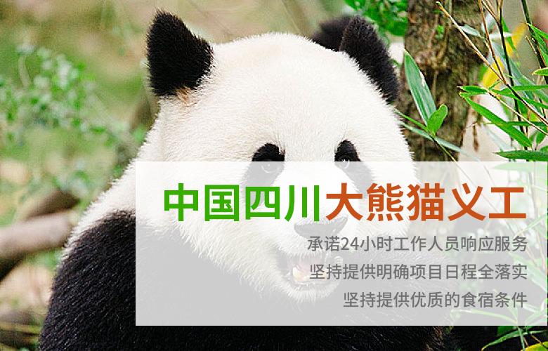 中国四川大熊猫义工