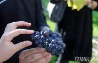 新西兰留学前景专业:新西兰葡萄酒栽培与酿造院校推荐