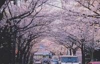 费用参考 | 日本各大热门城市费用的差异对比!
