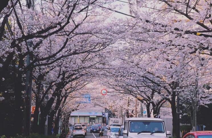 日本留学――SGU英文授课项目优劣势解析