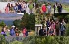 南方理工学院5级新西兰网页开发与设计大专文凭介绍