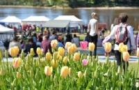 春天来了,塔斯马尼亚有哪些精彩节日和活动?
