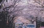 费用参考   日本各大城市费用差异对比!