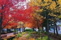 温莎大学是怎样一种存在?